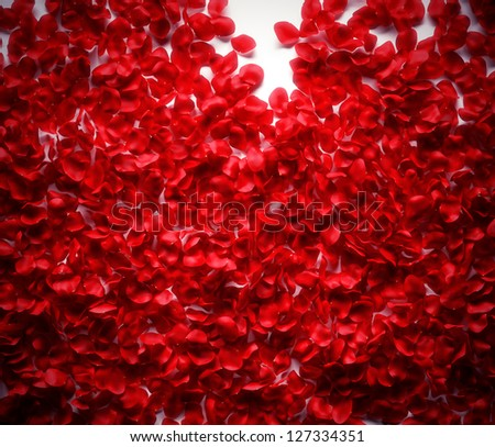 Rose petals background on white ground
