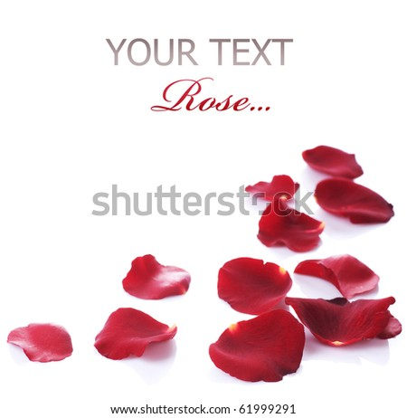Rose Petals Border.Isolated on white