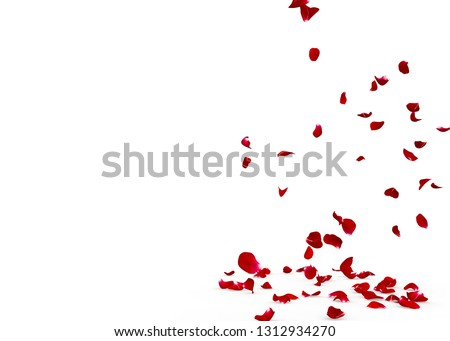 Rose petals fall beautifully on the floor. Isolated white background #1312934270