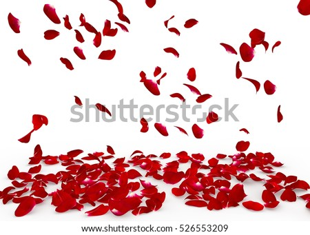 Rose petals fall to the floor. Isolated background #526553209