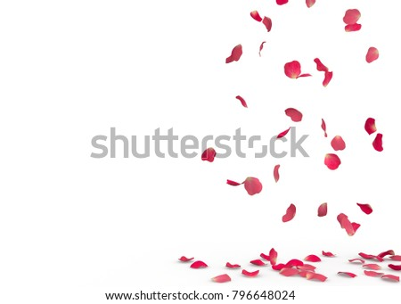 Rose petals fall to the floor. Isolated background #796648024