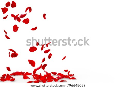 Rose petals fall to the floor. Isolated background #796648039