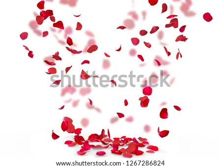 Rose petals fall to the floor. Isolated background. On a blurred background of rose petals #1267286824
