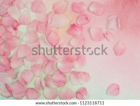 Rose petals floral background #1123118711