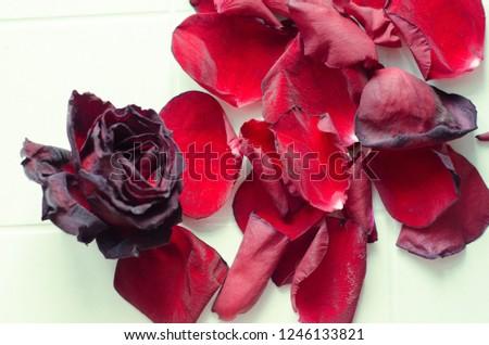 rose petals, flower petals #1246133821
