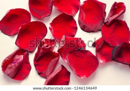 rose petals, flower petals #1246134649