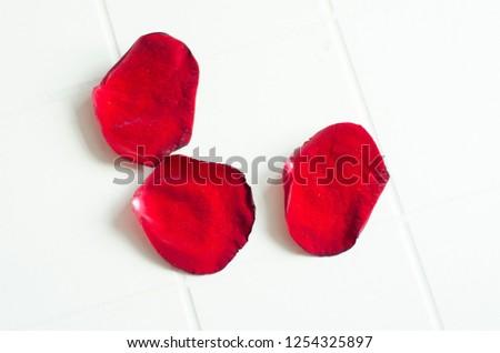 rose petals, flower petals #1254325897