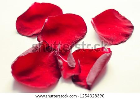 rose petals, flower petals #1254328390