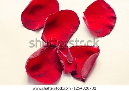 rose petals, flower petals #1254328702