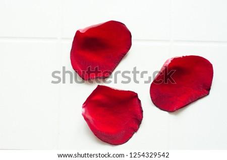 rose petals, flower petals #1254329542