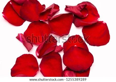 rose petals, flower petals #1255389289