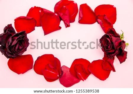 rose petals, flower petals #1255389538