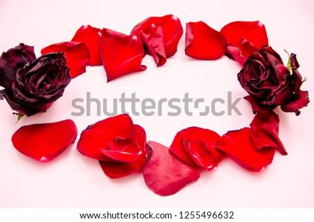 rose petals, flower petals #1255496632