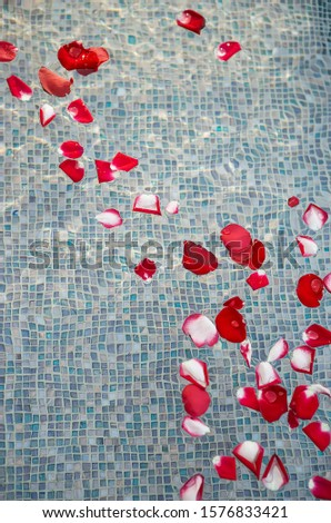Rose petals in water pool of a luxury hotel, Petals in water pool of a luxury hotel luxury hotel, swimming concept, leisure, parks and outdoor.