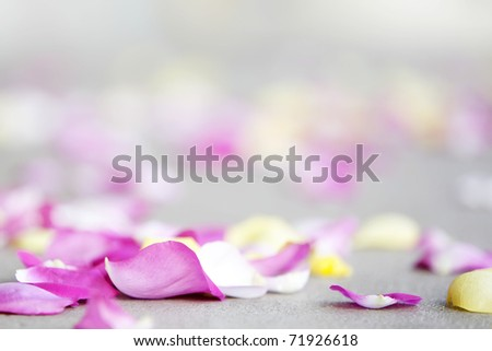 rose petals on sidewalk