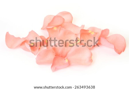 rose petals on the white background #263493638