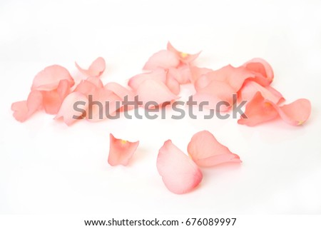 Rose petals on white background #676089997