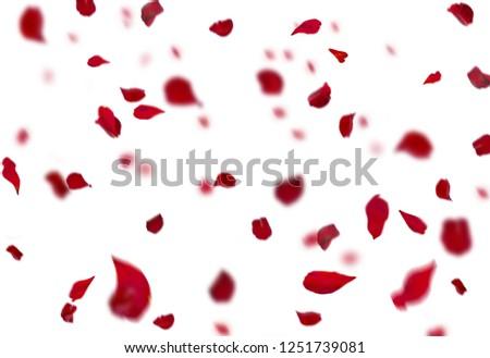 Rose Petals Stock Image #1251739081