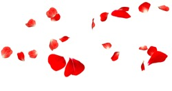 Rose Petals Stock Image with white background
