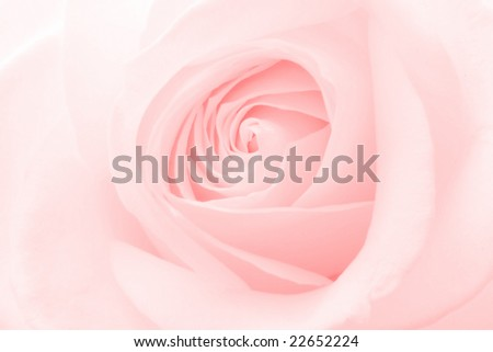 Rose pink background