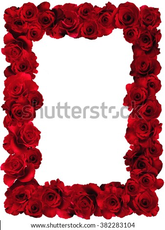 Rose.Rose frame.Red velvet roses in a bunch on a white background.Background abstract made of roses.Vermilion rose.