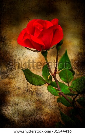 Rose texturized and placed on a classical background for vintage look.