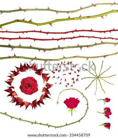 Rose thorns collection, isolated on white. Clipping paths for all photographed elements included, instead of the large thorns circle with the rose in it and the rotated rose lines that have no paths.