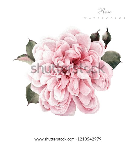Rose, watercolor, can be used as greeting card, invitation card for wedding, birthday and other holiday and  summer background.