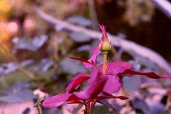 Rosebud loves beautiful Valentine wallpaper, Rosebud fresh leaves, warm and beautiful photo