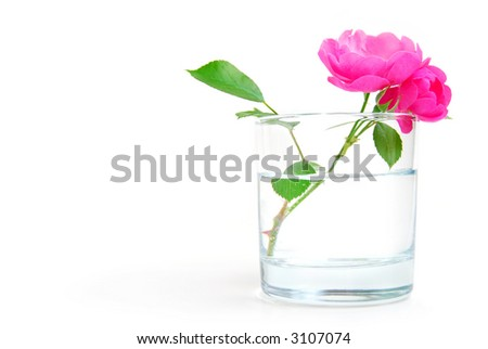 Rosehip flower in a glass of clear water, purity or freshness concept #3107074
