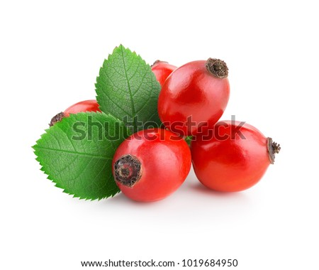 Rosehip isolated on a white background Stock photo ©
