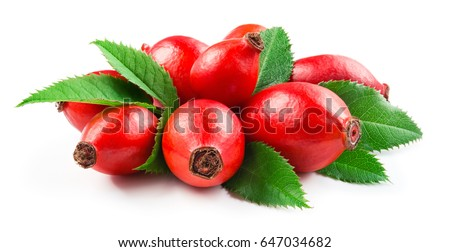 Rosehip isolated on a white background. Branch with berries and leaves. Stock photo ©