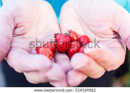 Rosehips harvest in hands. Natural healing concept