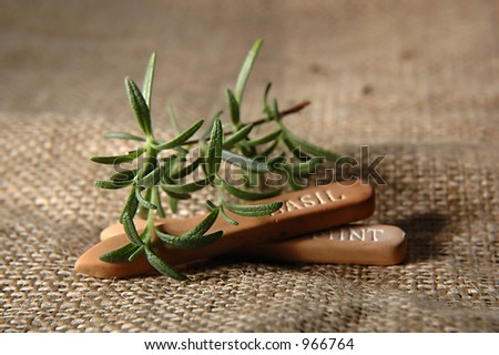 rosemary and herb garden markers