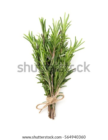 Rosemary bound on a white background #564940360