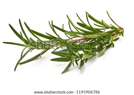 Rosemary branch, close-up  #1195906786