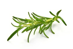 Rosemary branch, close-up, isolated on white background.