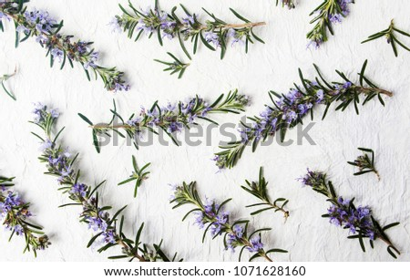 Rosemary branches in blossom on white background top view #1071628160