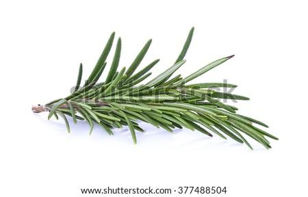 Rosemary isolated on white background #377488504