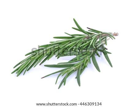 Rosemary isolated on white background #446309134