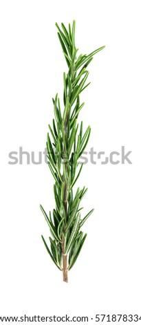 rosemary isolated on white background #571878334
