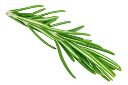 rosemary isolated on white background, clipping path, full depth of field
