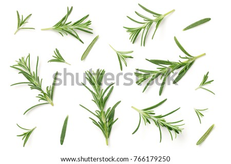 Rosemary isolated on white background. Flat lay. Top view
