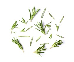 Rosemary isolated on white background, Top view.