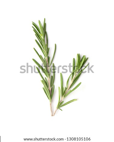 Rosemary isolated on white background, Top view. #1308105106