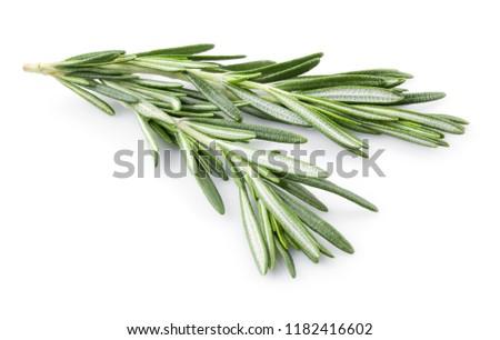Rosemary isolated. Rosemary on white. #1182416602