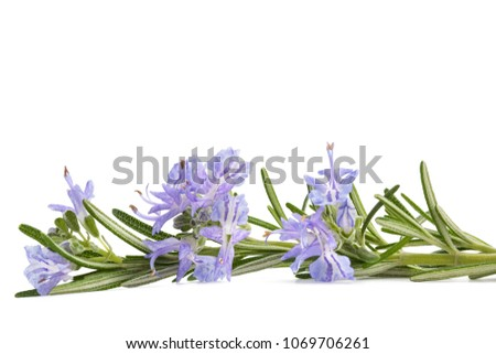 Rosemary sprig in flowers isolated on white background #1069706261