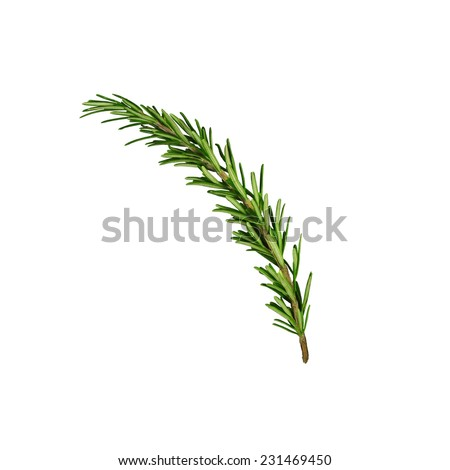 Rosemary sprig isolated #231469450