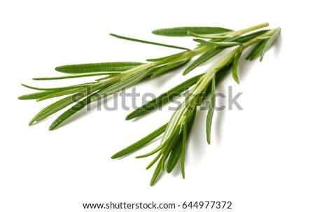rosemary sprigs  isolated on white background #644977372