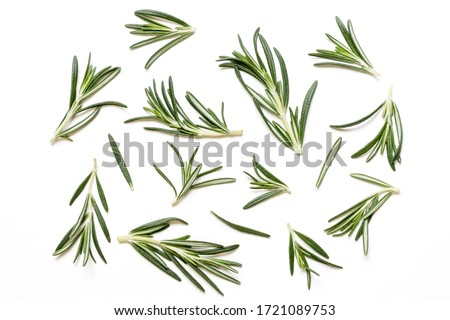 Rosemary twig and leaves isolated on white background. Top view